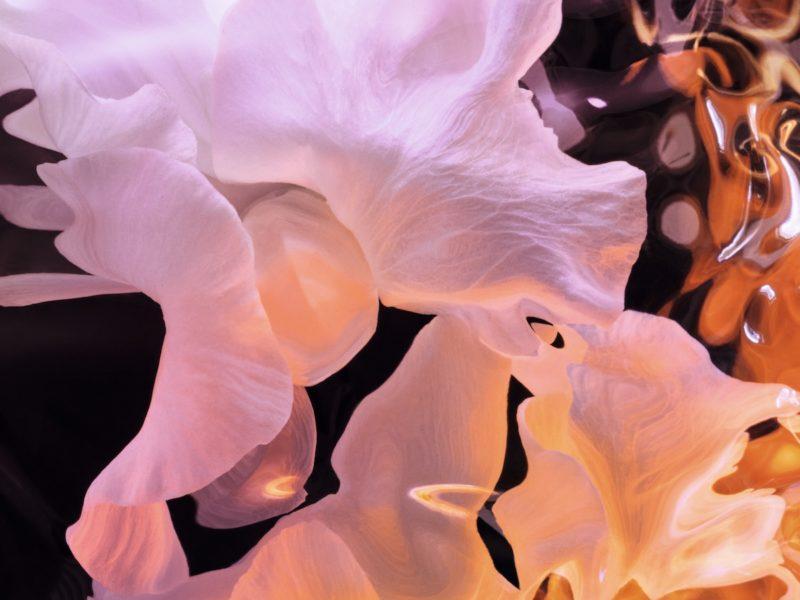 J'Adore, Eau de parfum Infinissime ©Dior